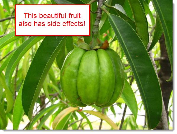 the garcinia cambogia fruit